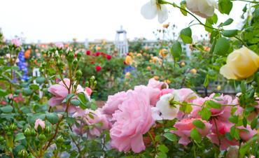 海宁国际花卉城景区指南