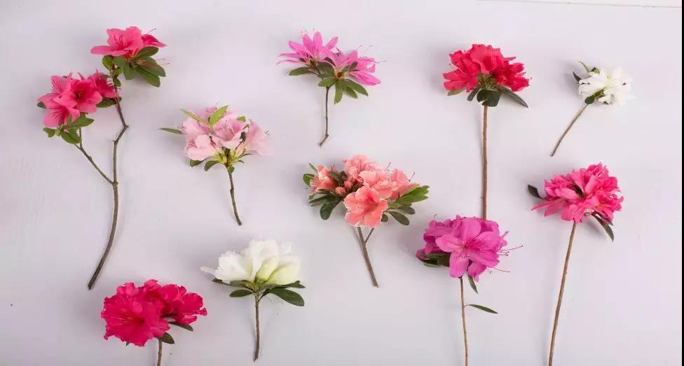 多季开花的爆花机器,给你的花园点颜色看看!