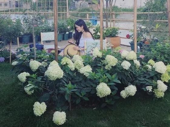 园艺世界 | 广东月季大神采访记