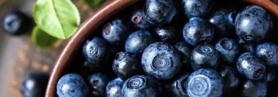 """想要从0开始学种蓝莓?这份""""大神指南""""送给你~"""